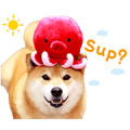 Shiba Maru + Pup-Ups