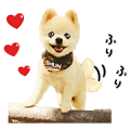 Shunsuke the Dog