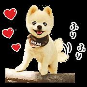 Shunsuke the Dog