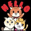 Little Orange MQ Cat