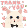 [BIG] CHOO CHOO CAT Thankful Stickers Sticker for LINE & WhatsApp | ZIP: GIF & PNG