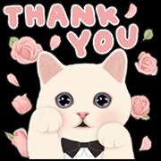 [BIG] CHOO CHOO CAT Thankful Stickers Sticker for LINE & WhatsApp | ZIP: GIF & PNG