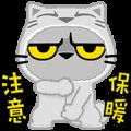 Meow Zhua Zhua – No. 7
