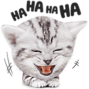 Kittens and Puppies! Sticker for LINE & WhatsApp | ZIP: GIF & PNG