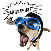 My Dogs and Cats Age Sticker for LINE & WhatsApp | ZIP: GIF & PNG
