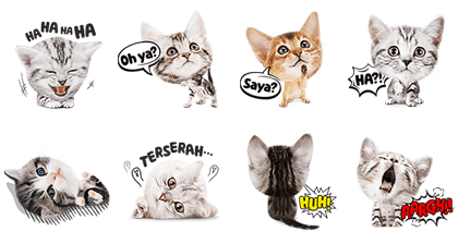 My Spoiled Friend, Meow Line Sticker GIF & PNG Pack: Animated & Transparent No Background | WhatsApp Sticker
