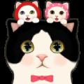 CHOO CHOO CAT TRIO