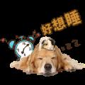 Pet's Murmur Time
