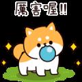 Answer Shiba Dog 3