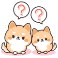 Contact of Shiba Inu Parent and Child