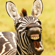 Comedy Wildlife Photography Awards Sticker for LINE & WhatsApp | ZIP: GIF & PNG