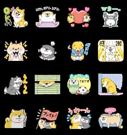 SHIBANBAN × LINE NEWS Line Sticker GIF & PNG Pack: Animated & Transparent No Background   WhatsApp Sticker