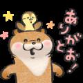 Cute lie otter × LINE Pay